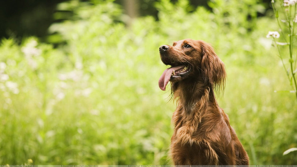 Herbs That Are Good For Dogs