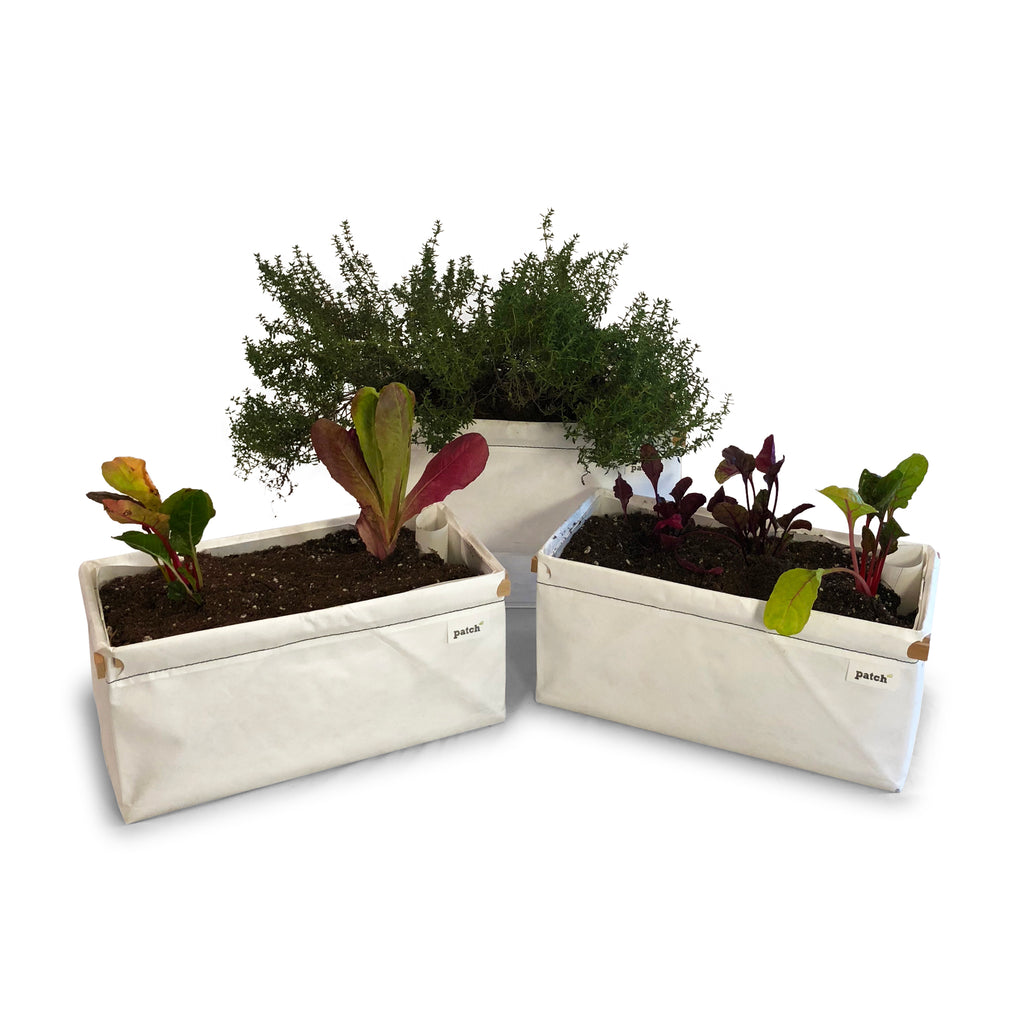Patch Planter 3 Pack