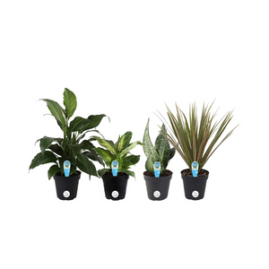 Save 20% on Live House Plants