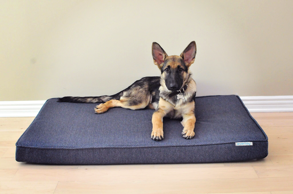 Everlay® Pet Bed
