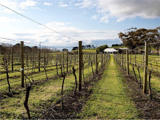 Bellarine Estate