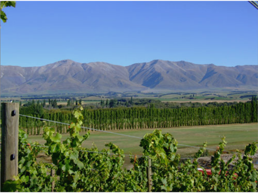 Kurow Winery