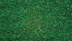 WWS - Forest ground cover - (200g.)