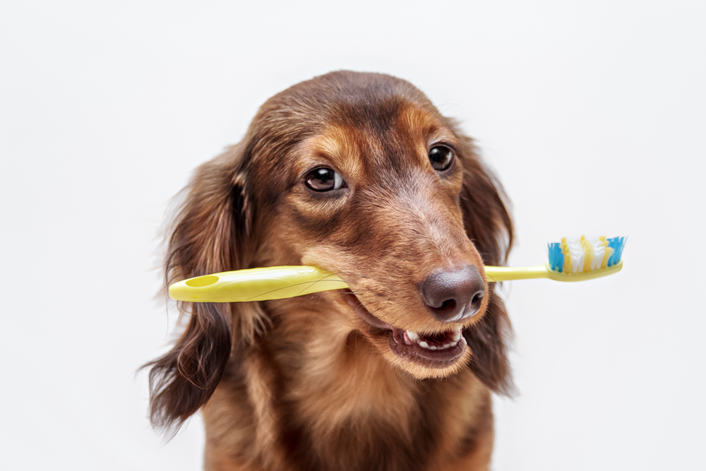 How to look after your pet's teeth