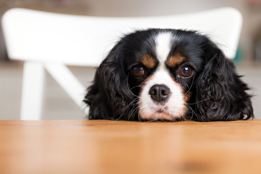 Costly Mistakes Made By Pet Owners: Part 1