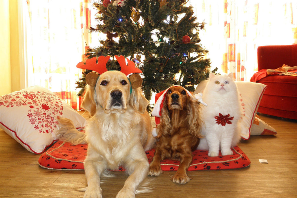 Things pet owners should be careful of during the festive season