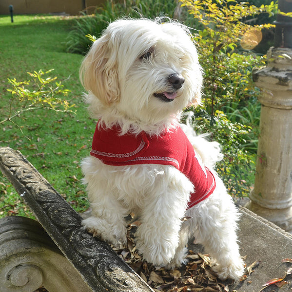 Cotton Fleece Sweater with themed patch- Red