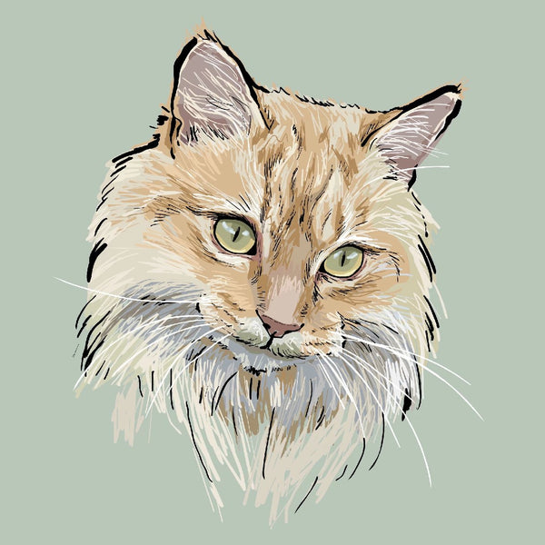 Custom Sketchy Cat Portrait
