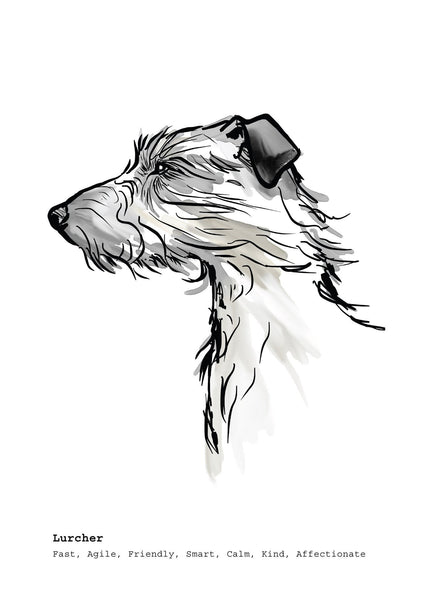 Scribble Print Studio Dog Breeds Lurcher Art Print