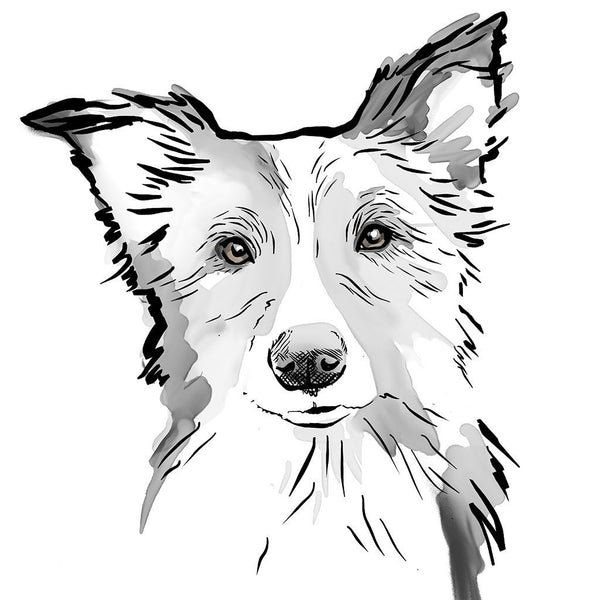 Scribble Print Studio Dog Breeds Personalised Border Collie Print
