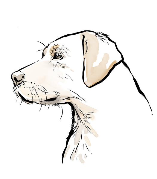 Scribble Print Studio Dog Breeds Personalised Labrador Breed Print