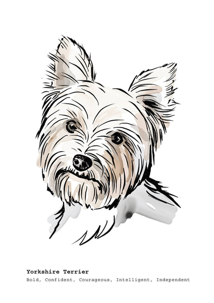 Scribble Print Studio Dog Breeds Yorkshire Terrier Art Print