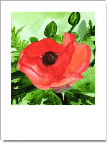 Red Poppies Greeting Card ~ 1220