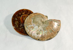 Ammonite - Raw Energy Tools