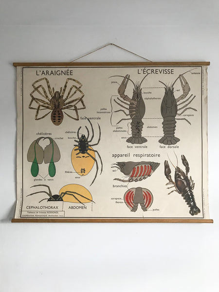 Vintage Double Sided Educational Poster