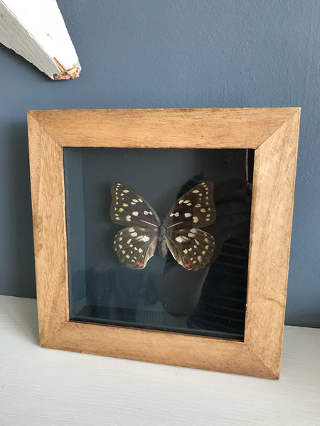 Vintage Boxed Framed Taxidermy Butterfly