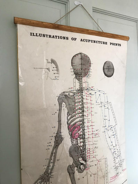 Vintage Acupuncture Illustration Chart