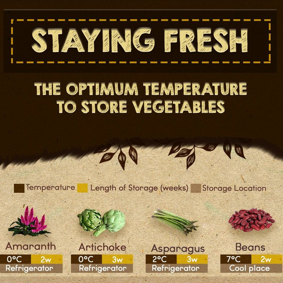 Staying Fresh: The Optimum Temperature to Store Vegetables