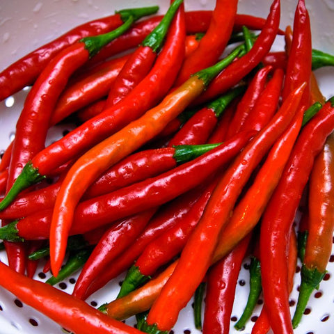 Pepper Hot