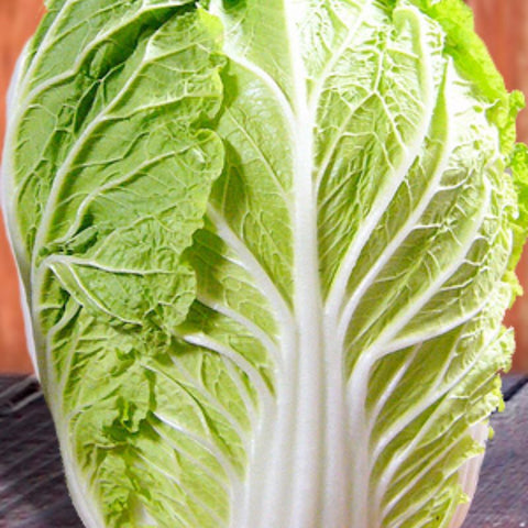 Cabbage Oriental Michihili Green - Grimes Farm Market Seeds