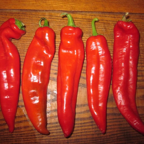Pepper Hot Tasty Salsa - Grimes Farm Market Seeds