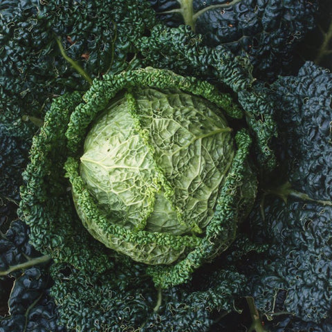Cabbage Savoy Ace - Grimes Farm Market Seeds