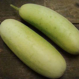 Cucumber Pickle/Boothby Blonde - Grimes Farm Market Seeds