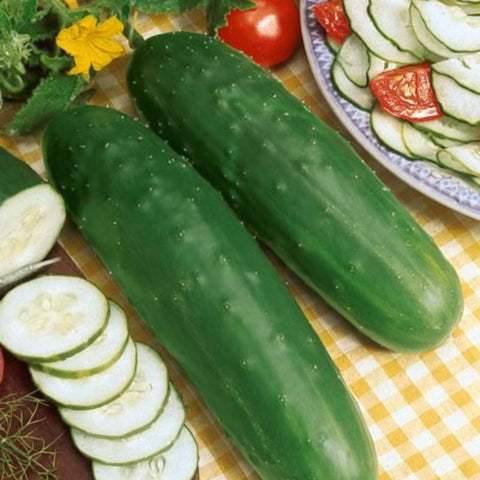 Cucumber Slicer Marketmore 76 - Grimes Farm Market Seeds