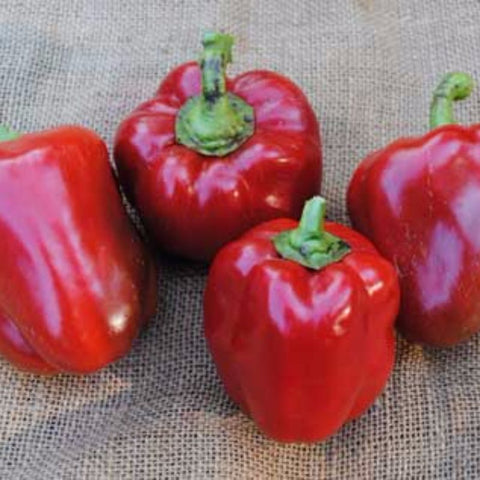 Pepper Sweet Jupiter - Grimes Farm Market Seeds