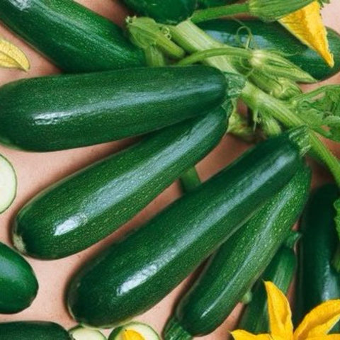 Squash  Black Beauty Zucchini - Grimes Farm Market Seeds