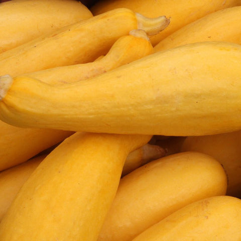Squash Summer Early Prolific - Grimes Farm Market Seeds