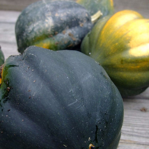 Squash Winter Table Ace - Grimes Farm Market Seeds