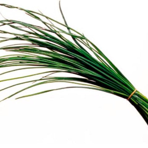 Chives - Grimes Farm Market Seeds