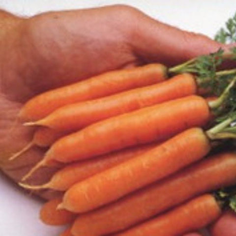 Carrot Butt'R Fingers