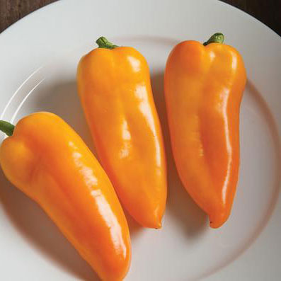 Pepper Sweet Cornito Giallo - Grimes Farm Market Seeds