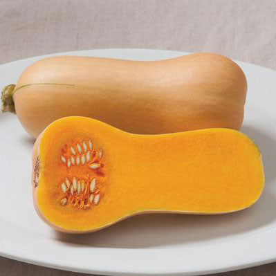 Squash Winter Butterscotch - Grimes Farm Market Seeds