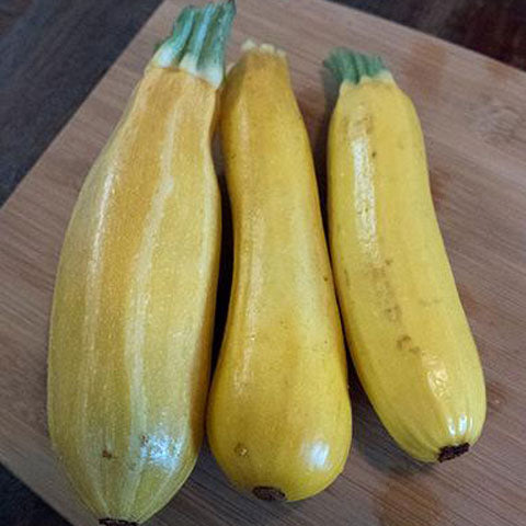Squash Summer Golden Zucchini - Grimes Farm Market Seeds