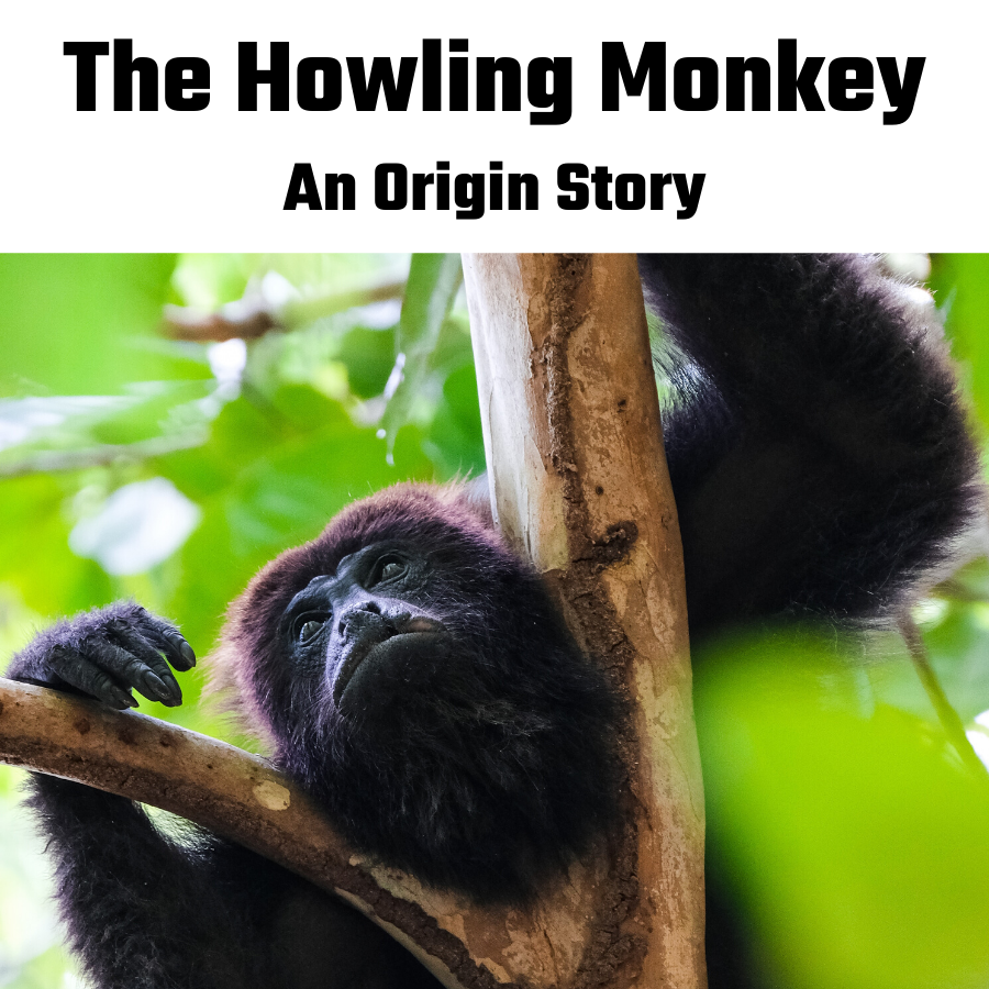 New Monkey on the Block: The Howling Monkey
