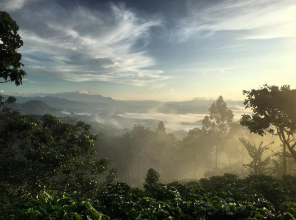 Relationships Matter: Year 2 with Gold Mountain Coffee Growers