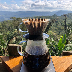 Gold Mountain Sample Flight - 3 Direct Relationship Nicaraguan Coffees