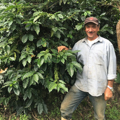 Nicaragua Pacamara Natural Process - Award-winning Direct Trade Coffee