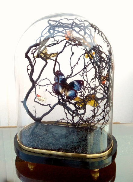 Beautiful Handmade Vintage Preserved Butterfly Dome Jar Designed For Be Bold As Brass
