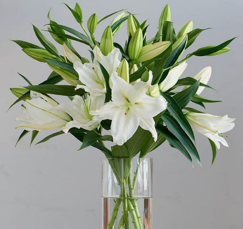 White Oriental Lillies