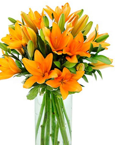 Orange Asiatic Lillies