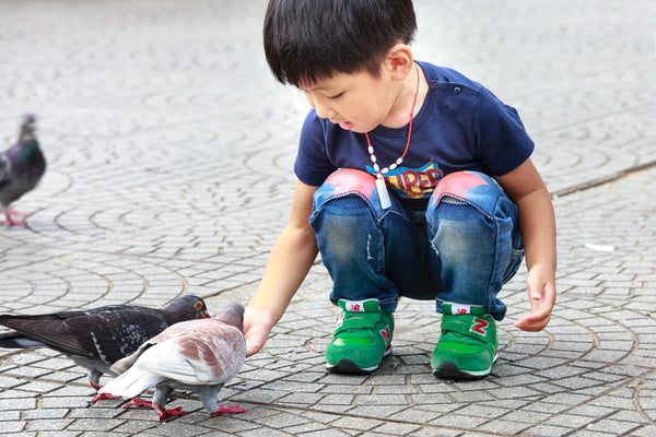 Toddler feeding pigeons