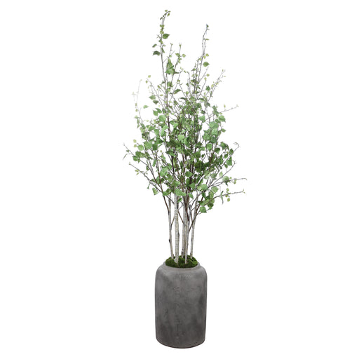 Aldis Potted River Birch