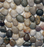 "Polished Pebble Mosaic, Mesh Mount 12"" x 12"" (Sold by the 10 SF Case)"