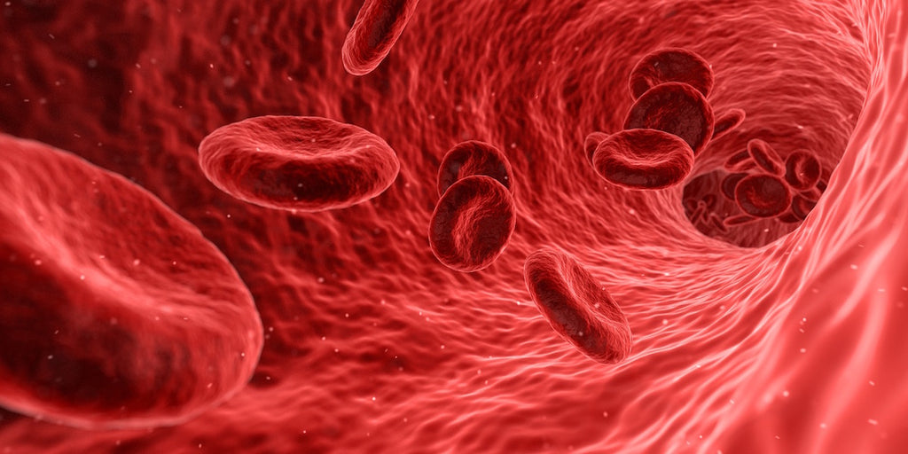 healthy blood cells and immune system