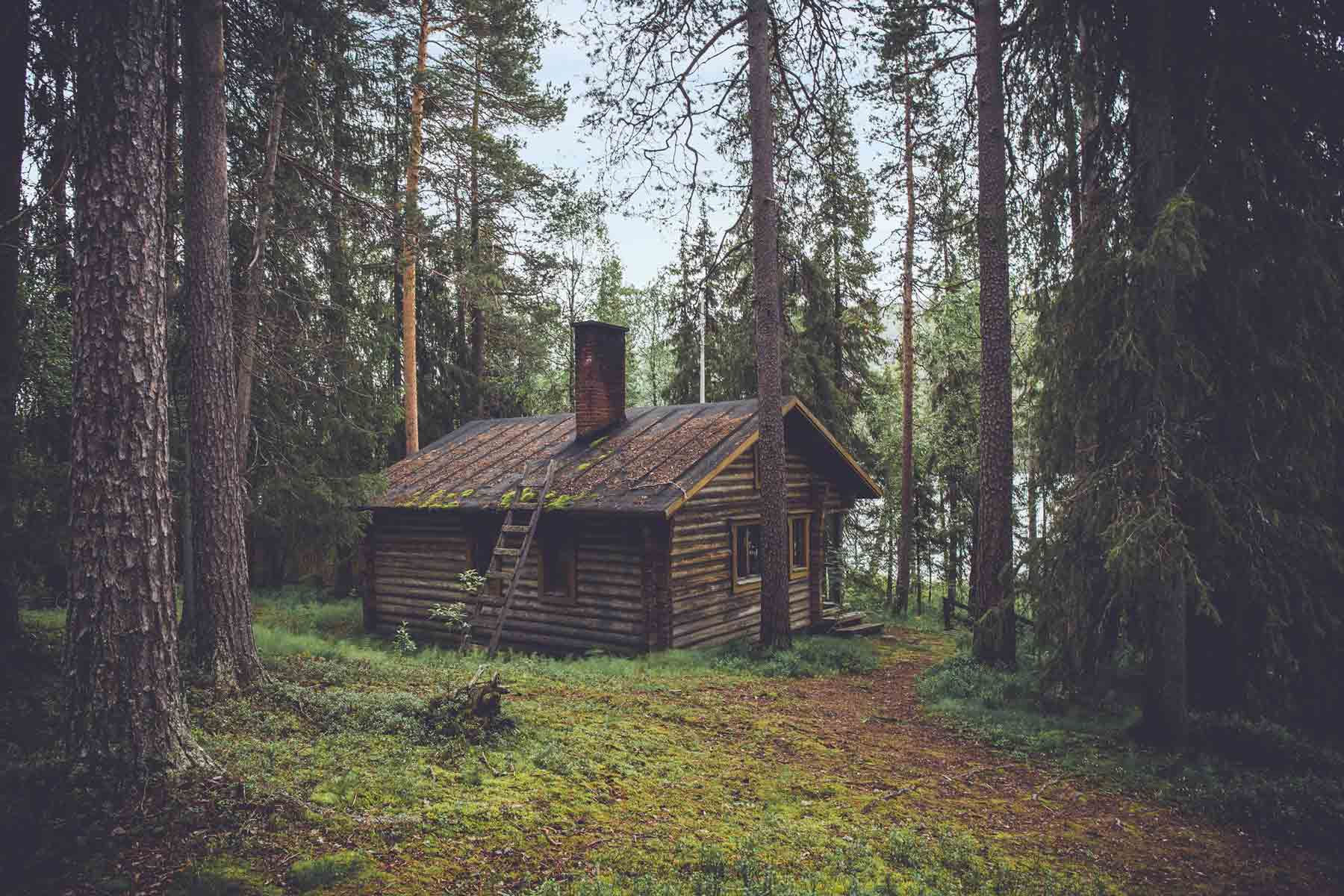 Log cabin in the middle of a pine forest