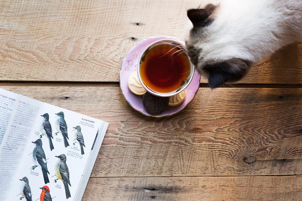 cat tea time drinking coffee on wood background